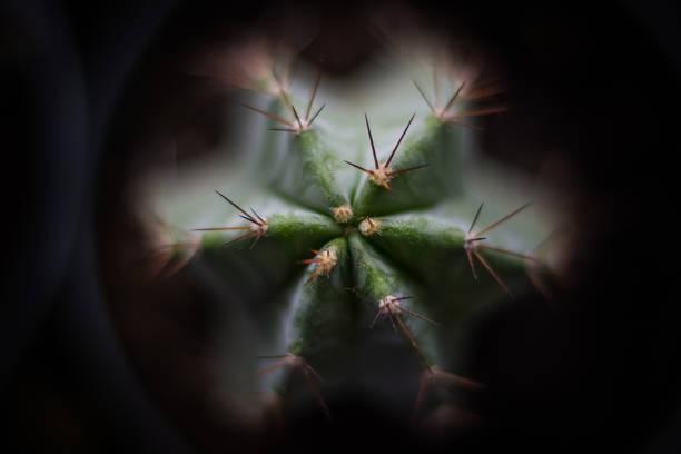 Kaktus zentriert die Ansicht von oben – Foto
