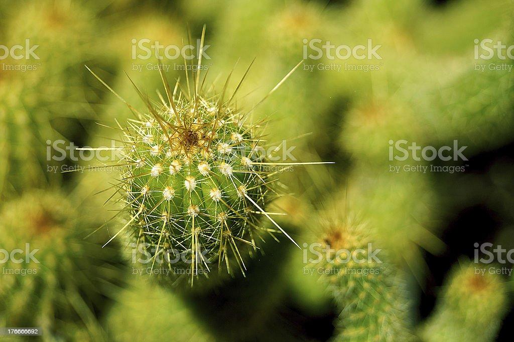 cactus primer plano foto de stock libre de derechos