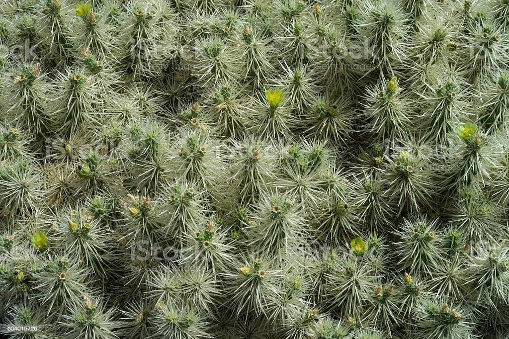 Cactus closeup  background stock photo