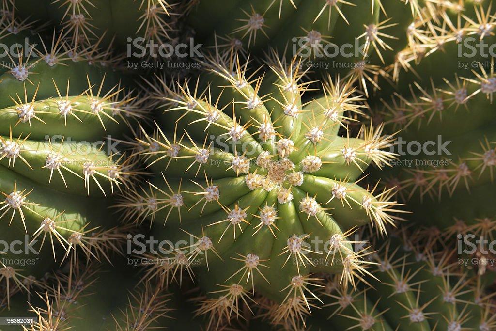 Cactus Close-up foto stock royalty-free