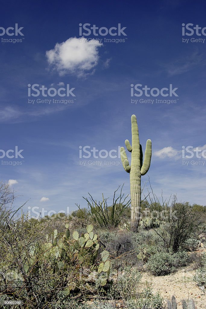 Cactus, Cloud and Sky royalty-free stock photo