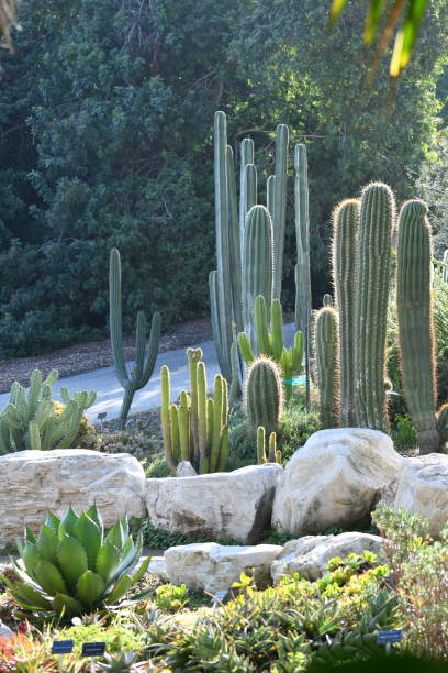 cactus collection in afternoon light - steven harrie stock pictures, royalty-free photos & images