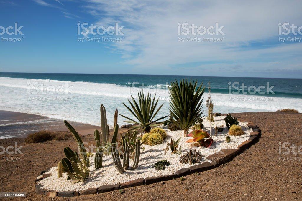 Cactus collection – zdjęcie