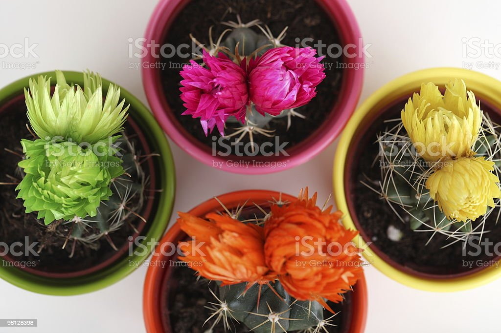 Cactus Collection royalty-free stock photo