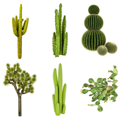 High Resolution (72MPx) Seamless Cactus Render COLLECTION / SET, 3D Images;  at XXXL size every Cactus has got a 12Mpx resolution (the Prickly Pear is been rotated by 90 degrees for keep the composition),