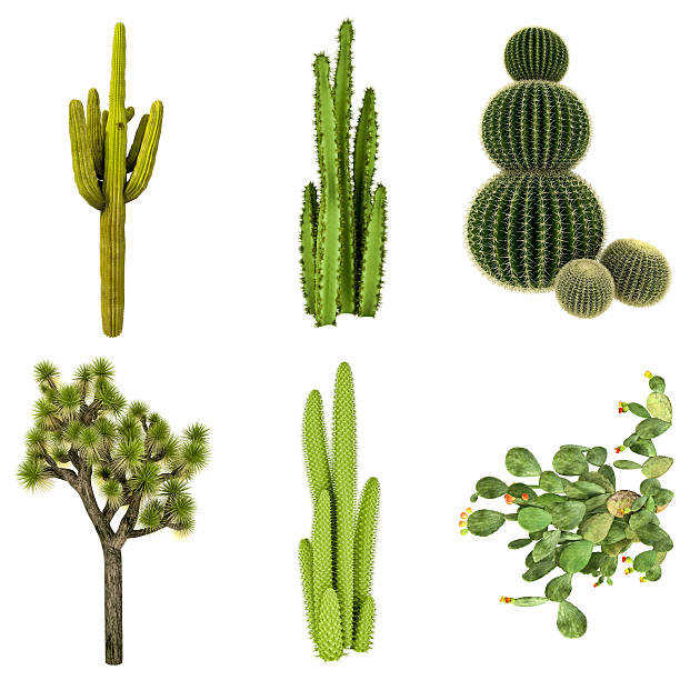 Cactus COLLECTION / SET Isolated on Pure White Background (72MPx-XXXL) stock photo