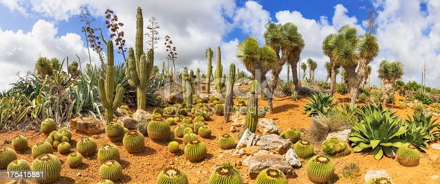 different types of cactuses in a dry area - panorama stitch