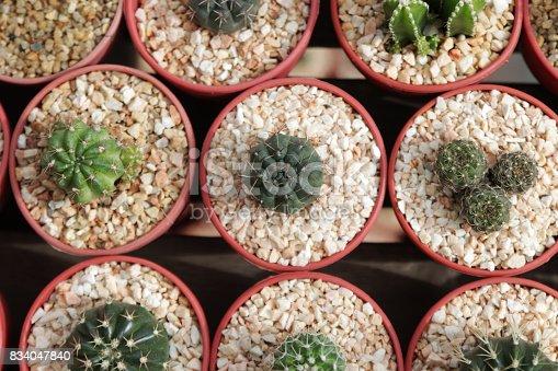 Cactus Désert Nature Vert Pour Fond Et Desktop Wallpaper Photos Et