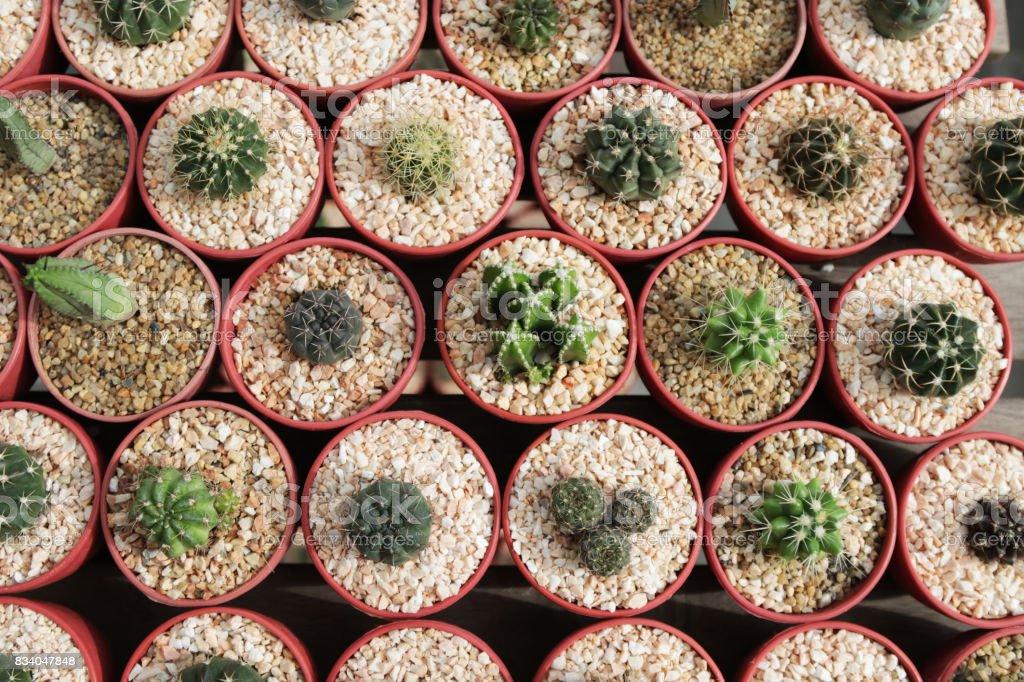 Kaktüs çöl Doğa Yeşil Arka Plan Ve Masaüstü Duvar Kağıdı Için Stok