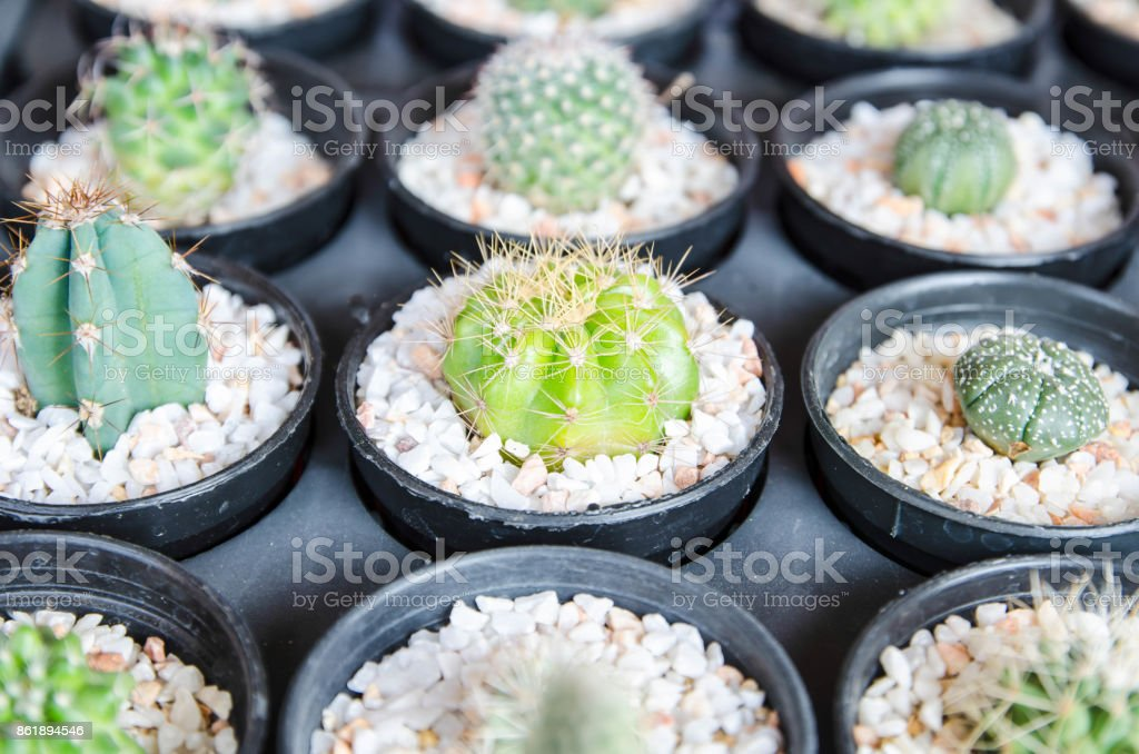 Cactus desert plant. stock photo