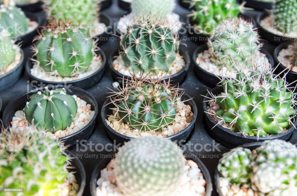 Cactus desert plant stock photo