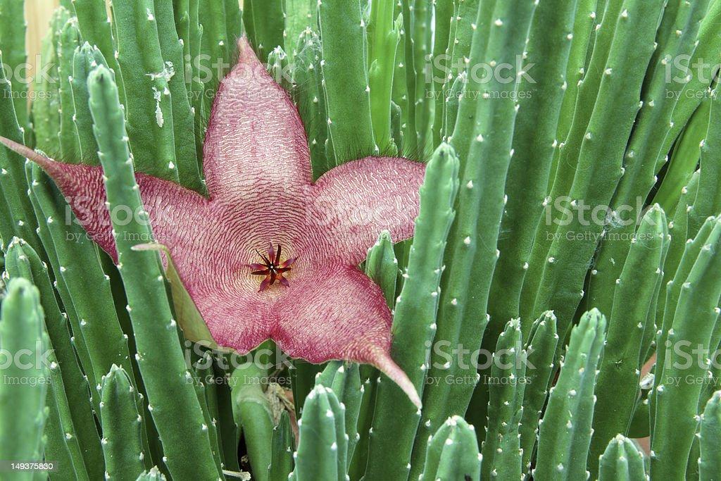 cactus flower stock photo