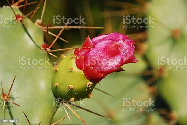 Cato Flor - Fotografias de stock e mais imagens de América Latina