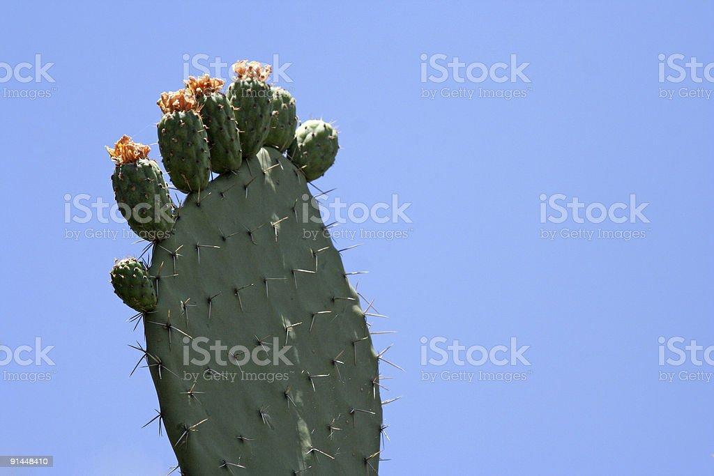 Cactus Foot stock photo