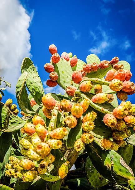 kaktusfrucht, blauen himmel - kaktusfrucht stock-fotos und bilder