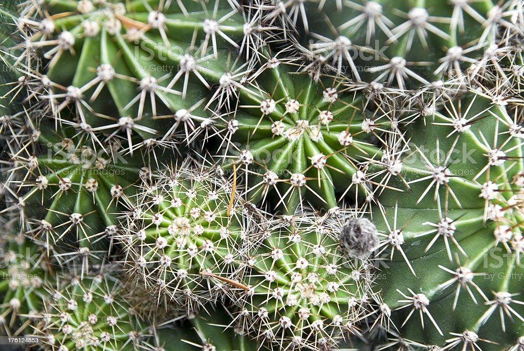 cactus full-frae background stock photo