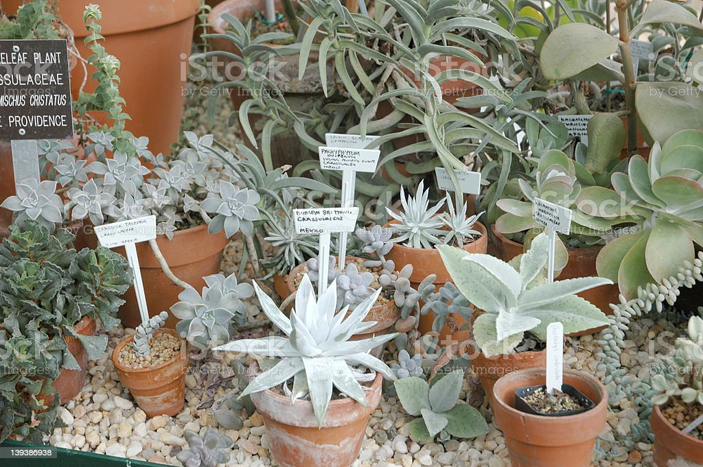 Cactus Garden 1 stock photo