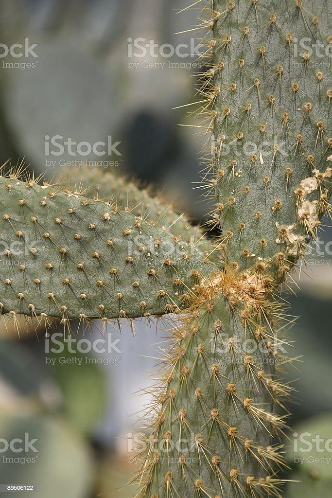 Cactus Garden Close Up royalty-free stock photo