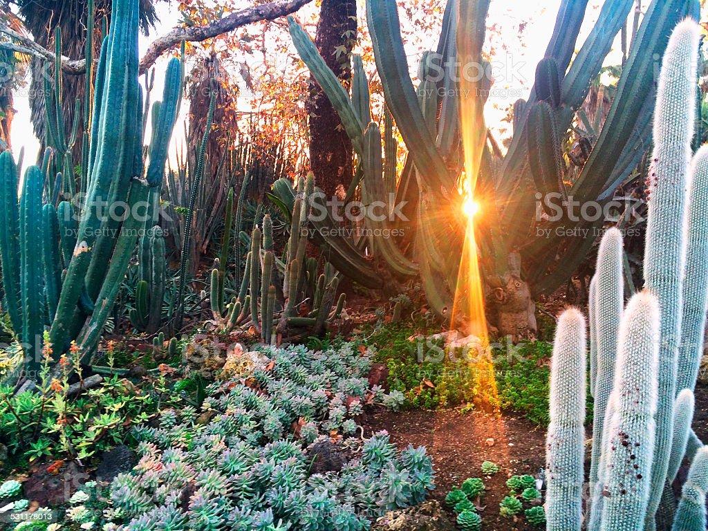 Cactus Garden stock photo