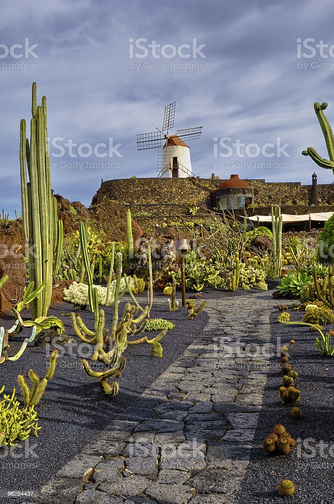 Jardim de cactos - Foto de stock de Cacto royalty-free