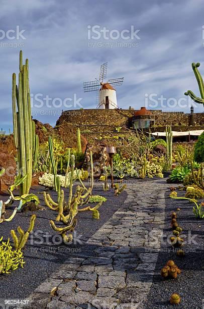 Foto de Jardim De Cactos e mais fotos de stock de Cacto
