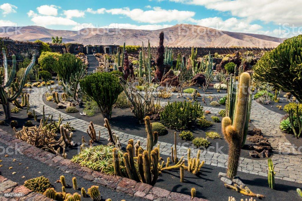 cactus garden view lanzarote stock photo