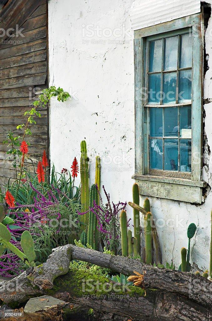 Cactus Garden Window royalty-free stock photo