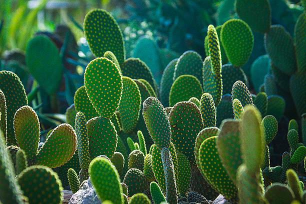 Cactus, Green Cactus Gargen 2 stock photo