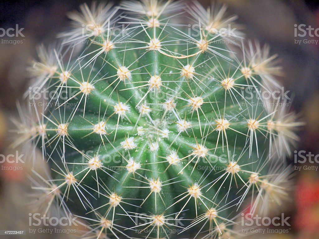 cactus green stock photo