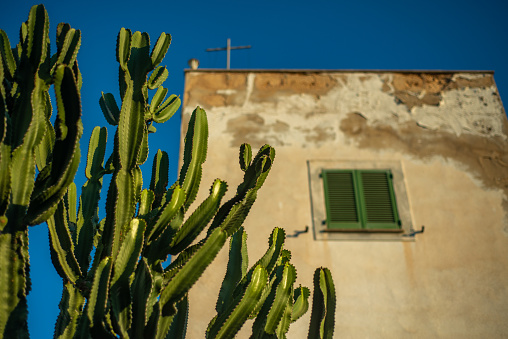 Cactus Grows in Front of a Rustic Mediterranean Style House With Traditional Green Wooden Shutters
