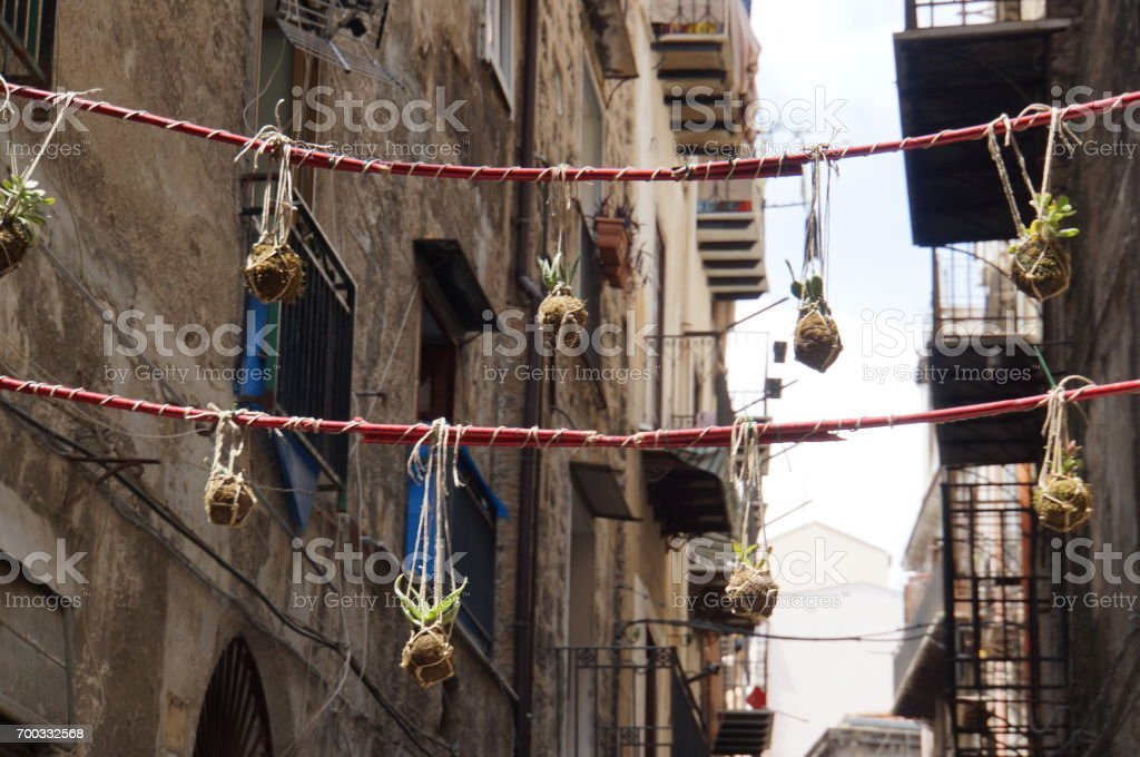 Cactus hanging in the streets stock photo