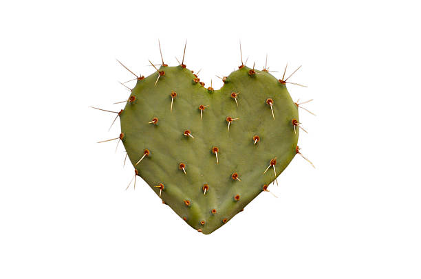 Cactus Heart stock photo
