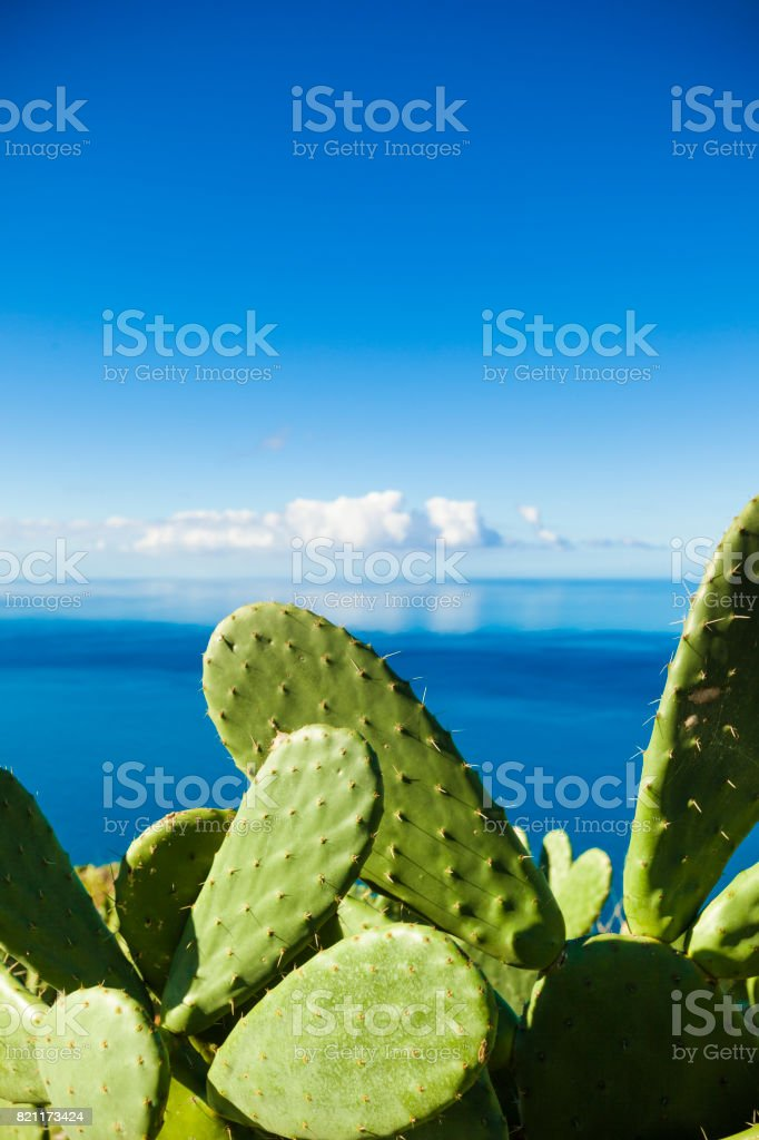 beautiful cactus plant with mirroring cloudscape open ocean in the...