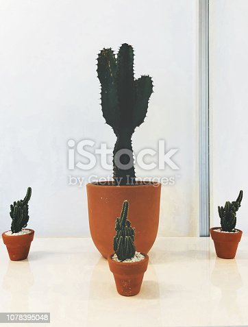 Cactus in a big three small pots