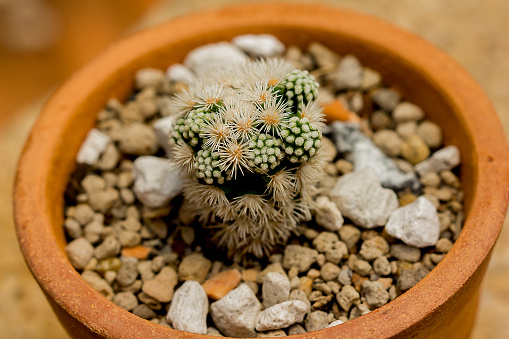 Cactus in a pot is placed on the floor.