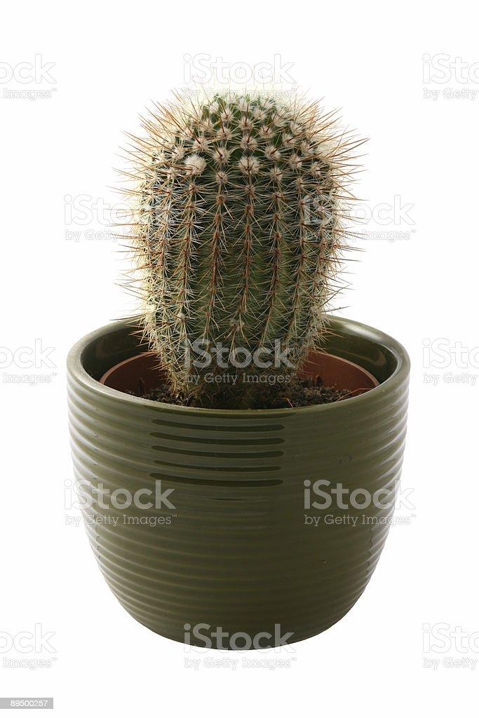 Cactus in una pentola foto stock royalty-free