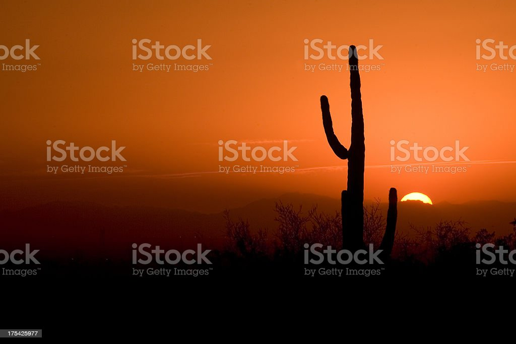 Cactus in an Arizona Sunset royalty-free stock photo