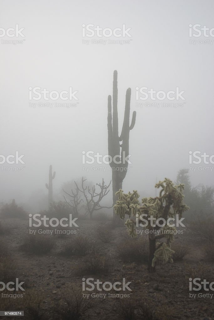 Cactus in Arizona Fog royalty-free stock photo