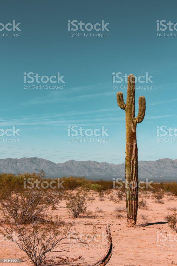 Cactus in Arizona USA stock photo
