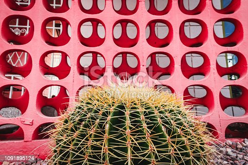 Cactus in front of mid-century modern cinder blocks.