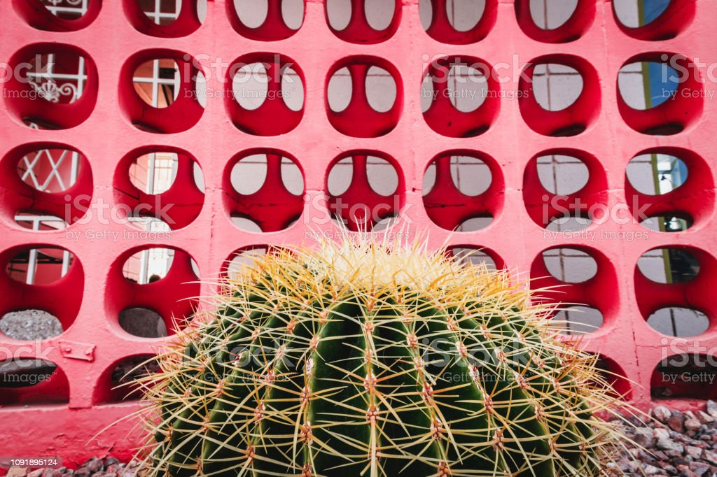 Cactus in front of mid-century modern cinder blocks stock photo