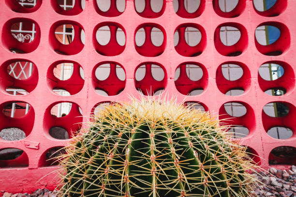 cactus in front of mid-century modern cinder blocks - midcentury design stock photos and pictures