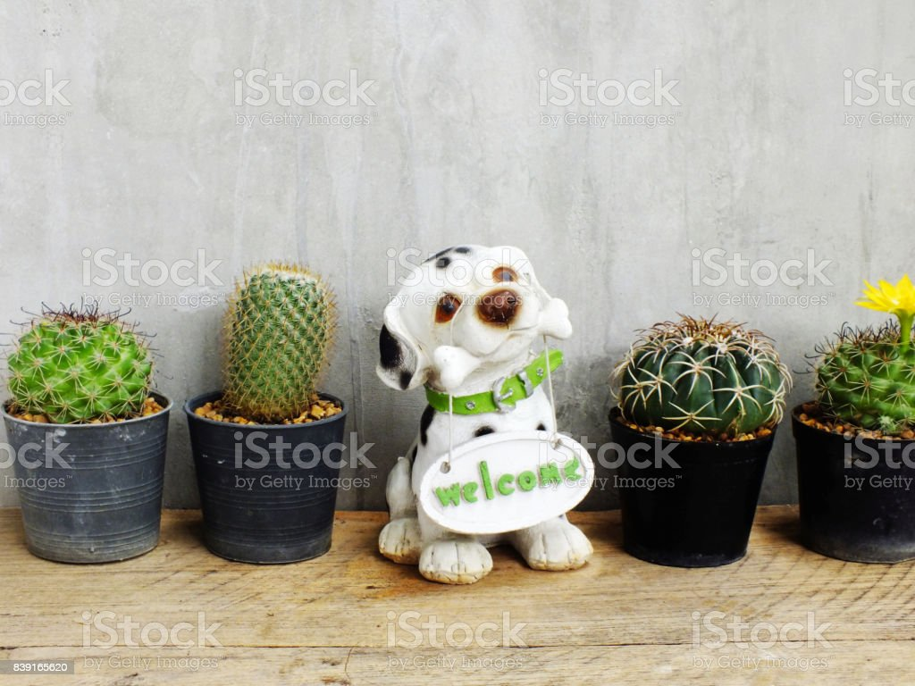 cactus in pot on wooden table still life stock photo