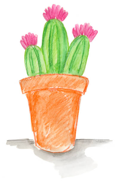 Cactus in Pot Watercolor Watercolor flowering cactus in terracota pot kathrynsk stock pictures, royalty-free photos & images