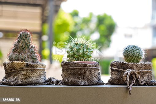 Three cactus in sack bag put on the wall.