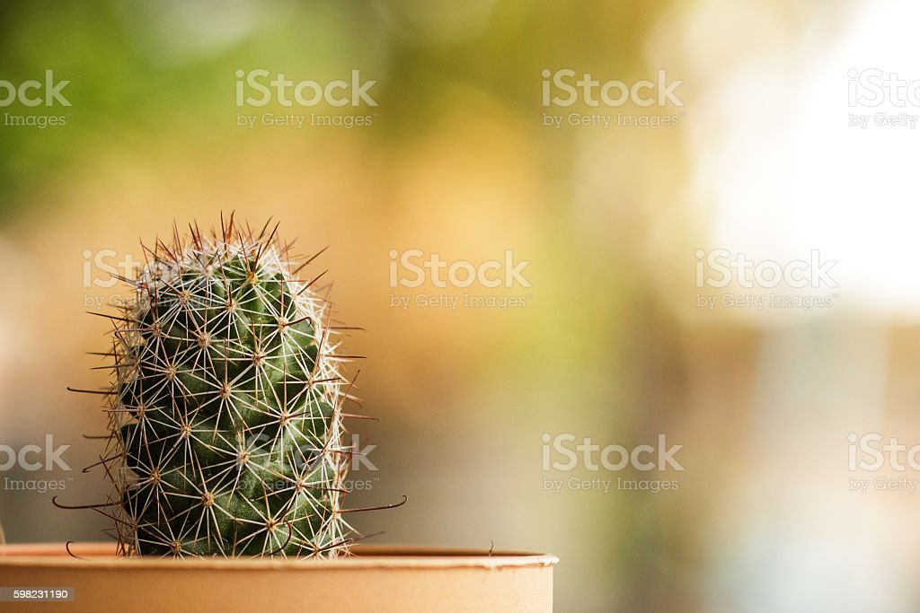 cactus in the garden and evening light foto royalty-free