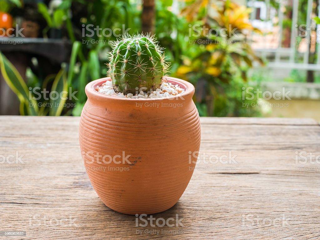 Cactus in the garden royalty-free stock photo