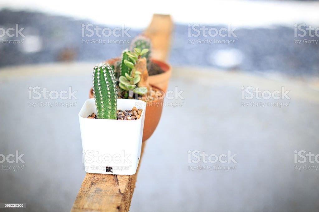 cactus no jardim foto royalty-free