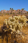 Cactus in the Mojave Desert - Joshua Tree National Park, shot with a SONY DSC.