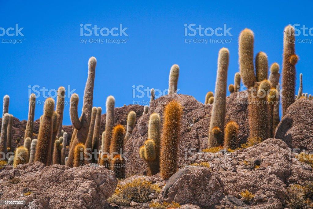 Cactus Island in Bolivia stock photo